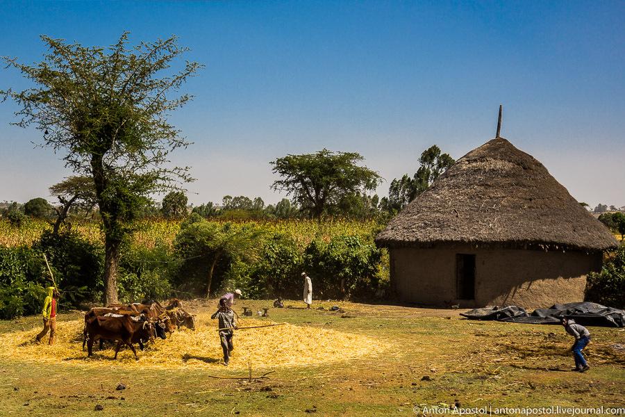 В эфиопской деревне у силте. Версия 2.