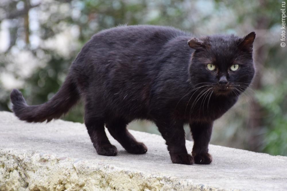 Коты и кошки, которые живут в Сочи, фотографии.