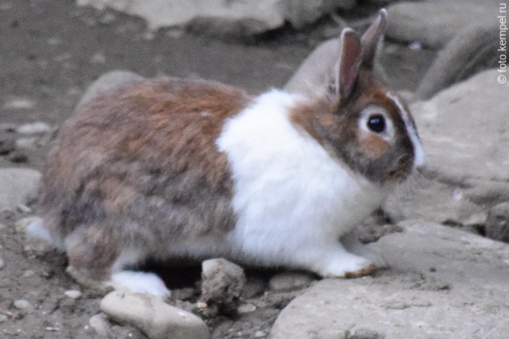 Кролики, живущие в сочинском Дендрарии