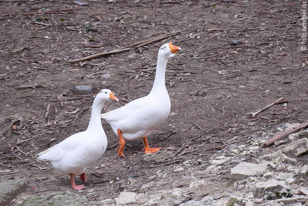 Птицы живущие в Сочи в Дендрарии и на улицах Сочи