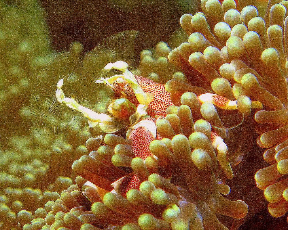 Самые опасные рыбы Таиланда
