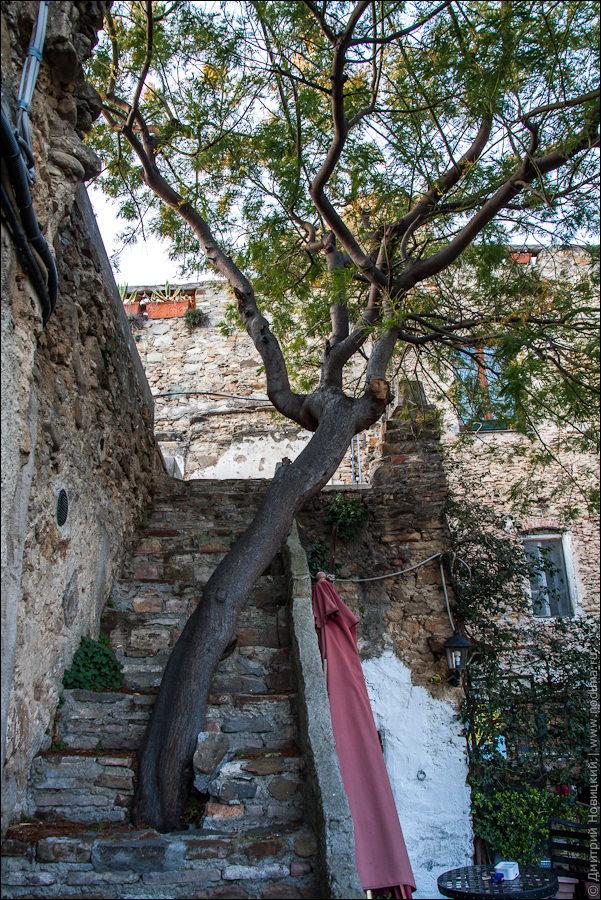 Дерево в лестнице