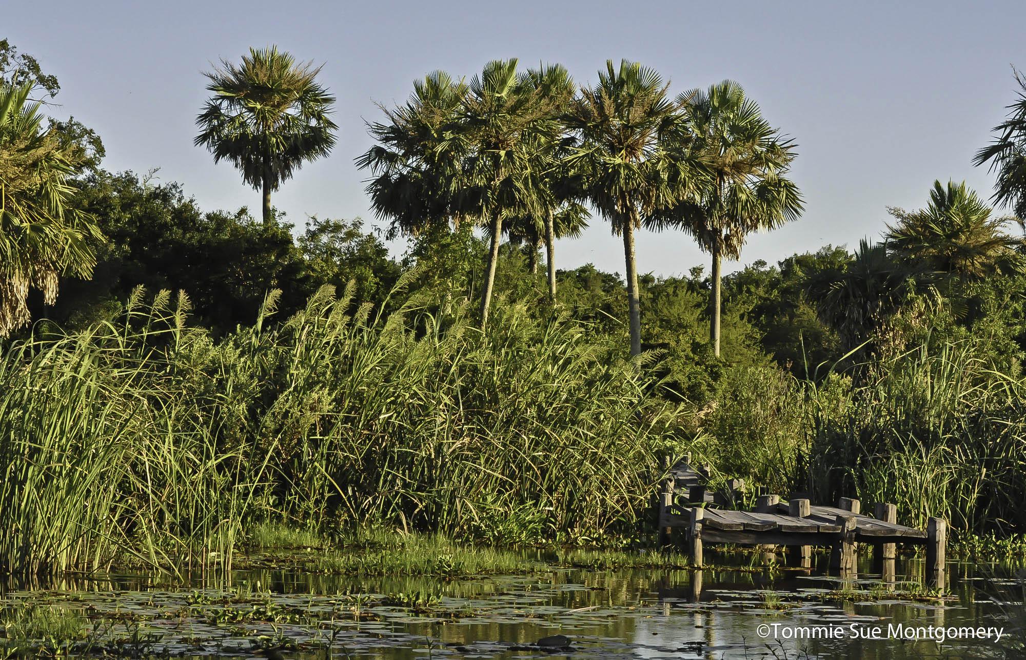 Lake Ibera