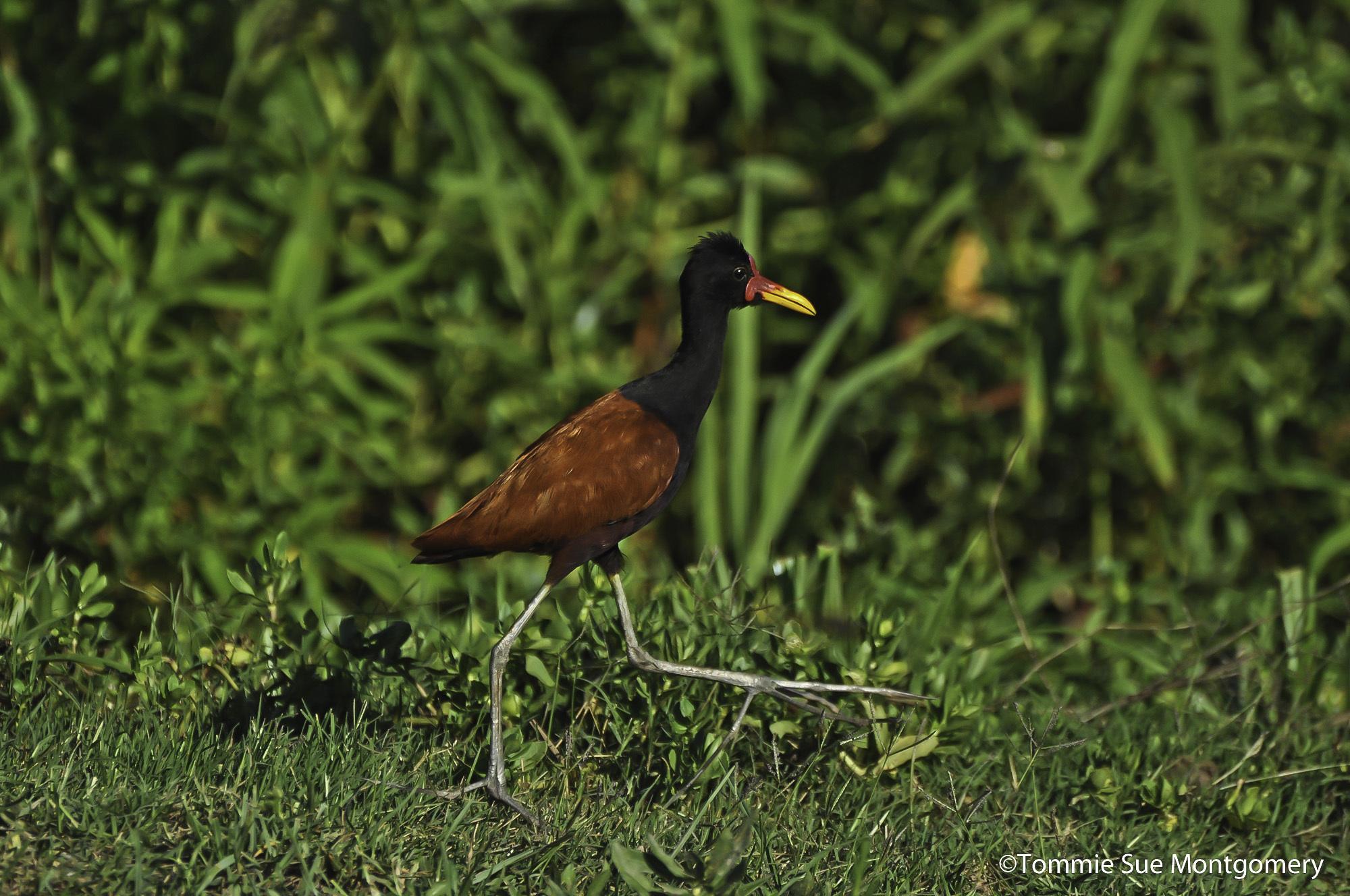 bird walking across a floating island