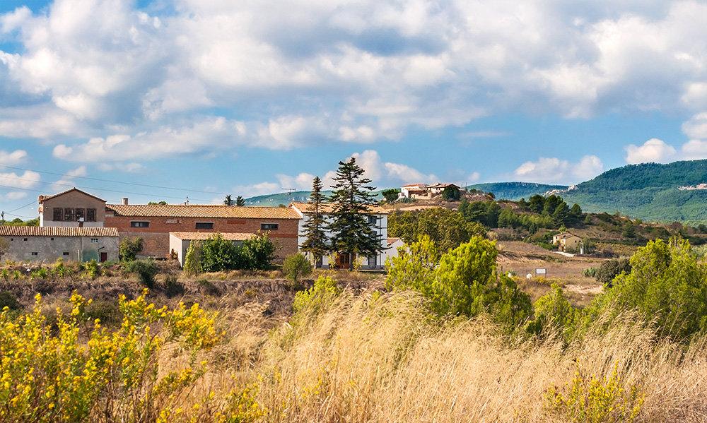 Энотуризм в Испании или экскурсия по винодельне  Микель Жане