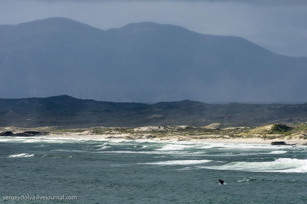 Южные Гладкие киты