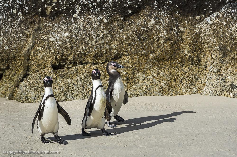 Мыс Доброй Надежды и африканские пингвины