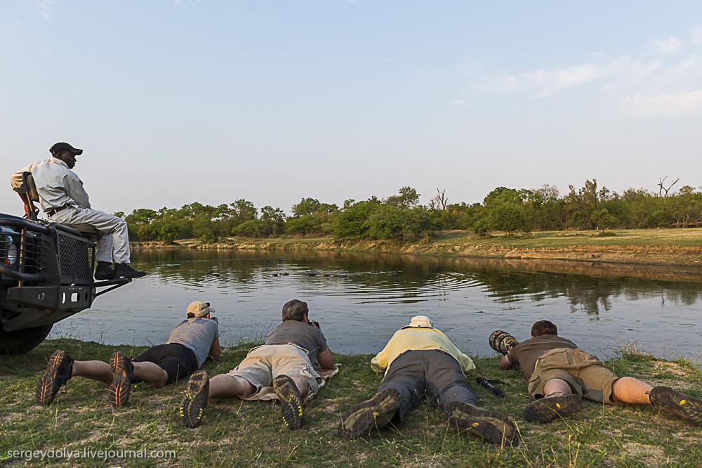 Африканское сафари. Как это происходит
