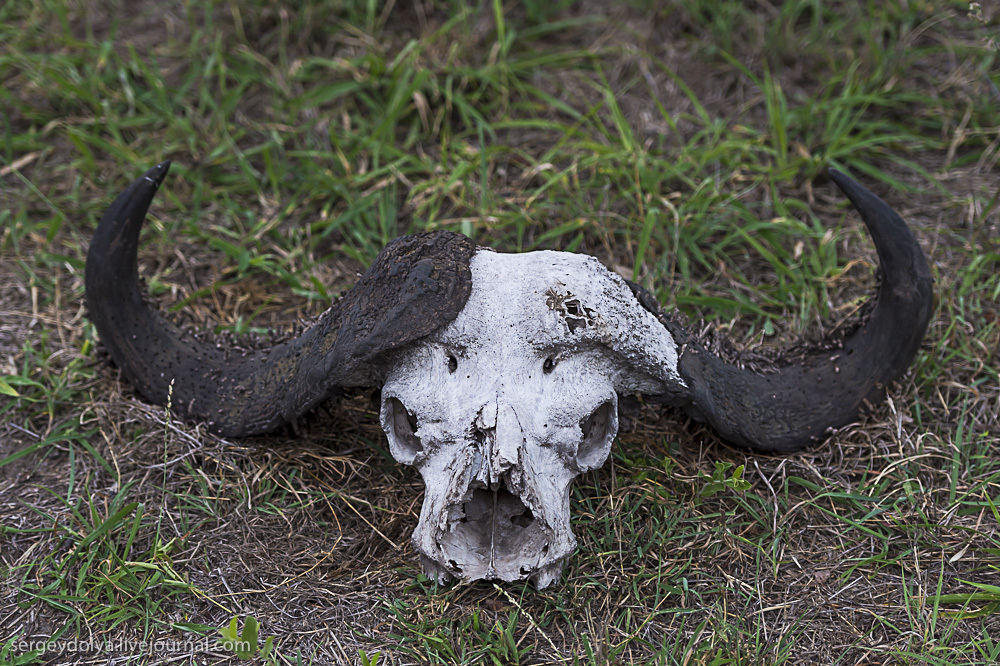 Животные Африки