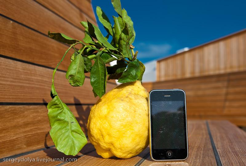 Меня поразили размеры местных лимонов.